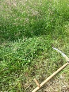 Sense liegt im Gras