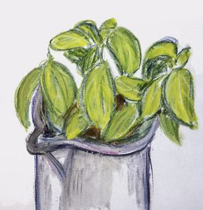 Basilikum Illustration von Anne Webert